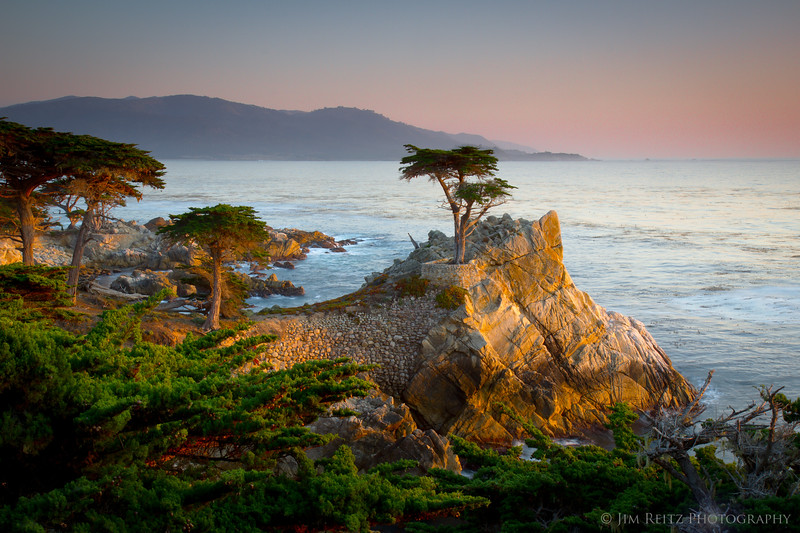 Lone Cypress, 17-mile drive between Pebble Beach and Monterey.