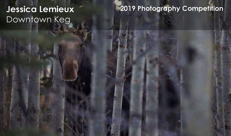 Jessica Lemieux 4.jpg