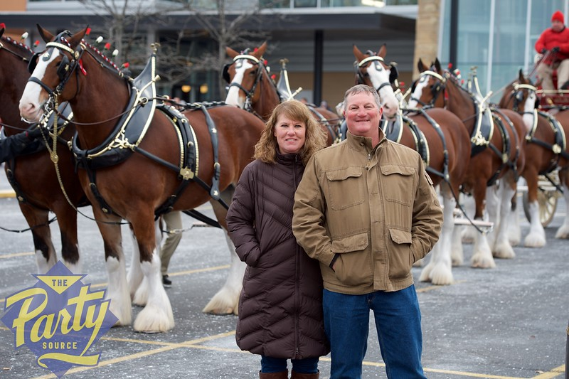 Clydesdale Portraits 6.jpg