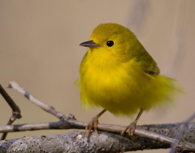 yellow13-5.jpg