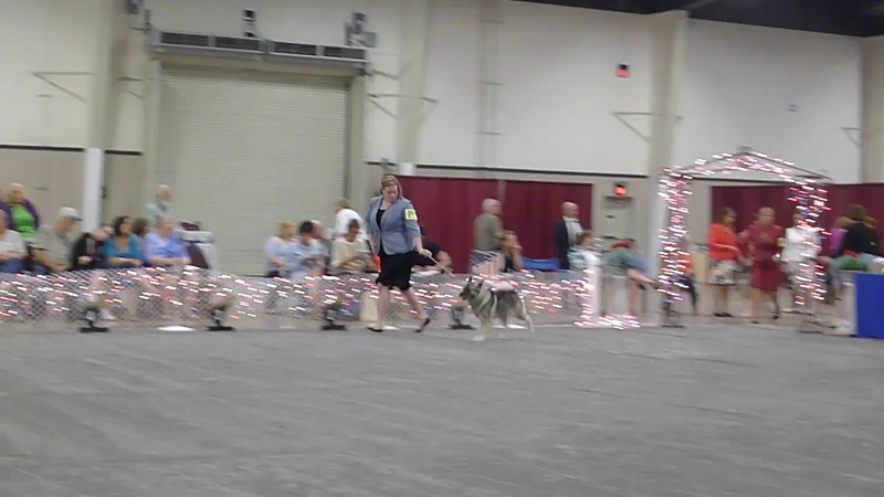2016-06-16 VIDEO Thur Best of Breed & other later classes