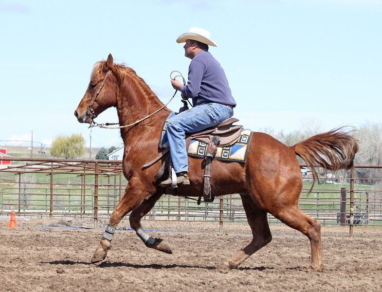 Intermountain Versatility Ranch Horse competition in Idaho