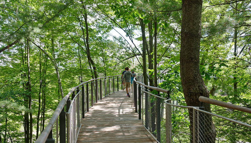 Dow Gardens - Whiting Forest Canopy Walk (3).jpg