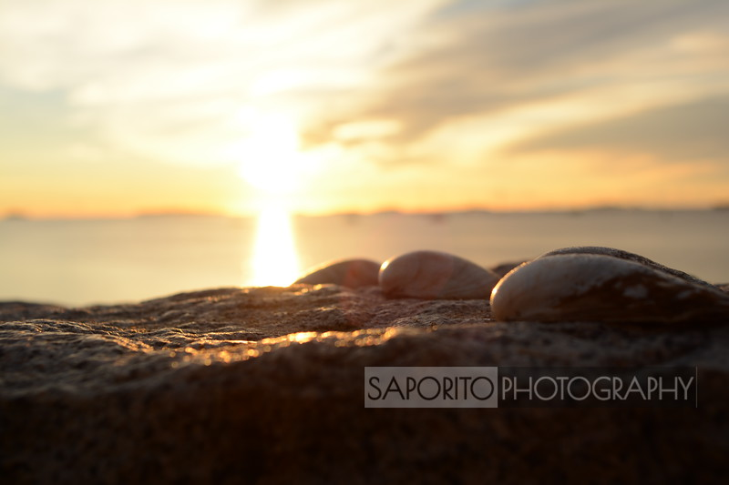 Bevrely Harbor Dawn
