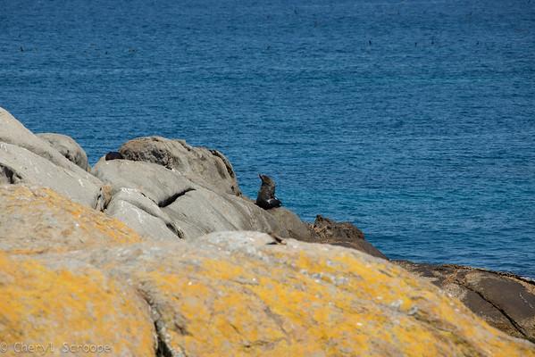 Montague Island 2013