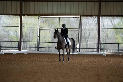 Horse 492