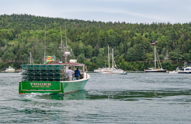 Acadia Nat'l Park-Terry's - July 2017-184.jpg