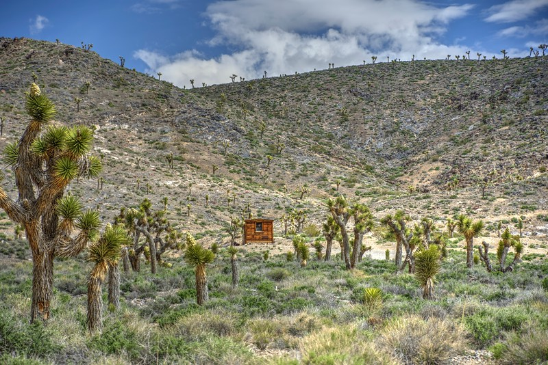 Joshua-Trees-CabinShot-Death-ValleySingleShot-Beechnut-Photos-rjduff.jpg