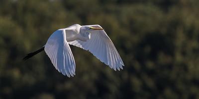 Storks - Storke
