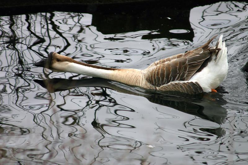 Leavenworth 3 Goose #3.jpg
