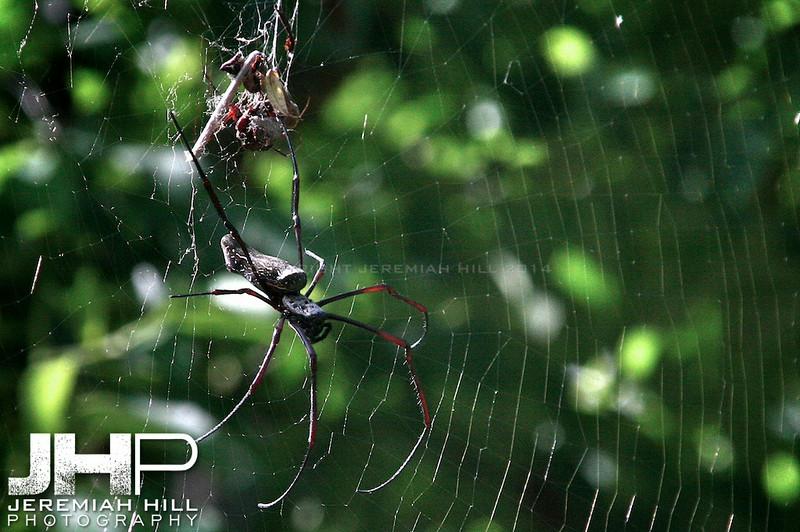 """Perhentian Spider"", Perhentian Islands, Malaysia, 2007 Print ML-067"
