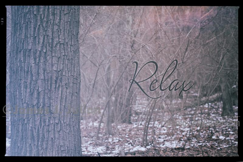 Winter Tree Poster (2x3 format)