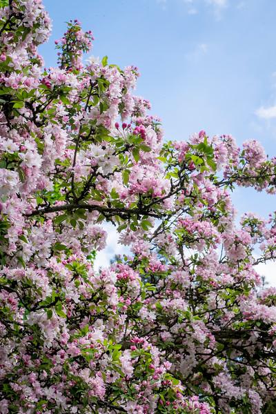 spring_15_021.jpg