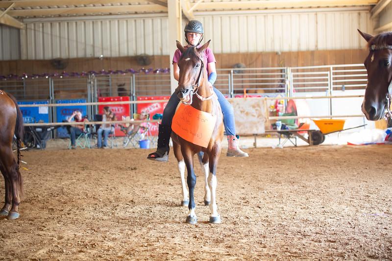 HorseCostume-49.jpg