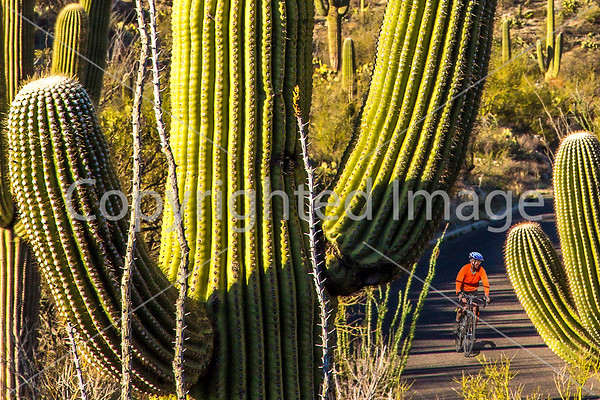 Saguaro National Park - Cyclists on Cactus Forest Drive