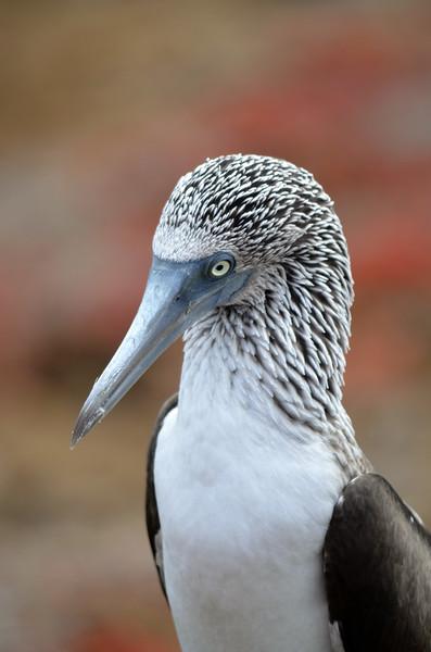Galapagos Adventure: 2017