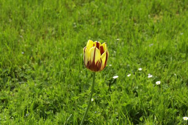 Botanical Garden - May 2011