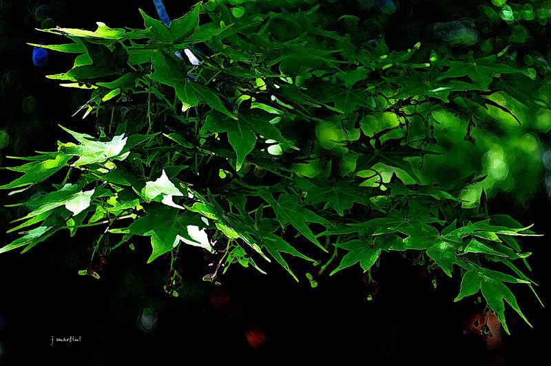 canopy 11-29-2011.jpg