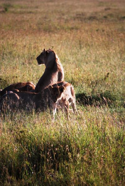 Serengeti (109).JPG