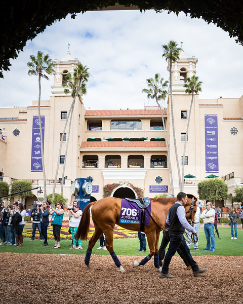 Good Magic schools in the paddock at Del Mar 11.02.17.