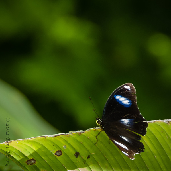 INSECT - butterfly-1525.jpg