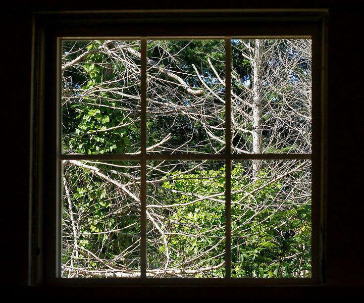 Trees Through the Window