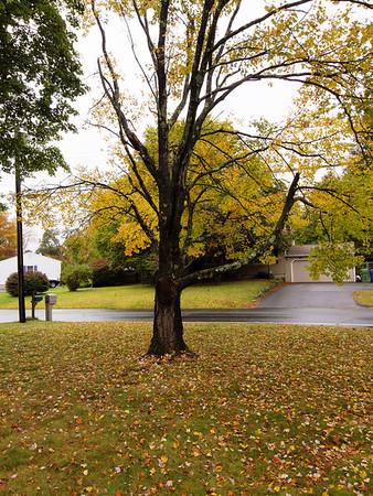 Tree_Oct. 10, 2012