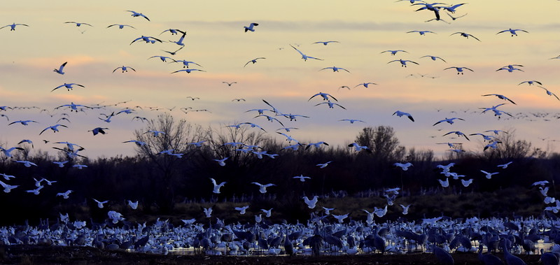 Evening Roost