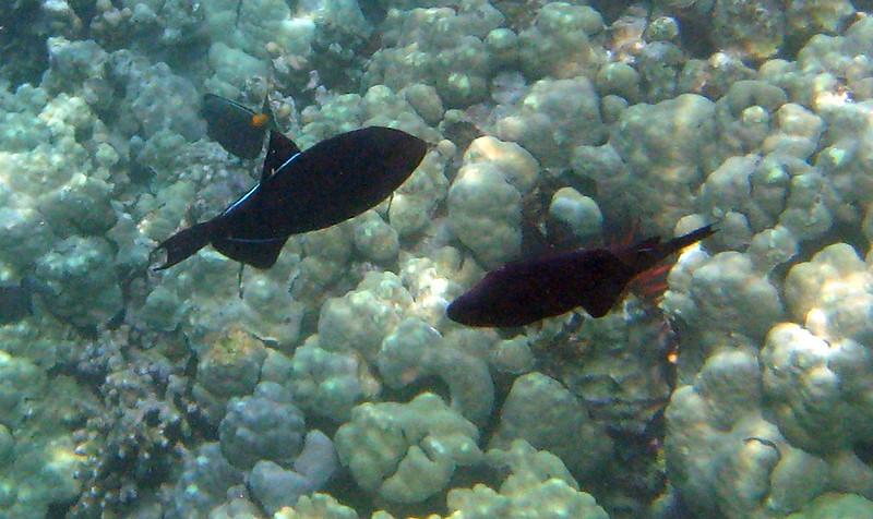 423- 20080416- Hawaii 20-Snorkelling IMG_0580.jpg