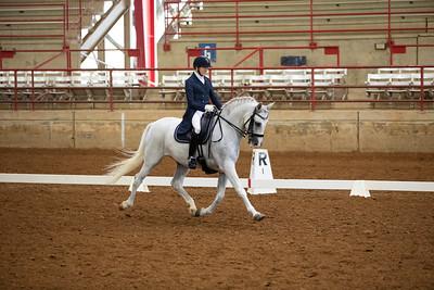 Horse 256