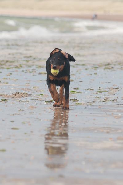honden-05679.jpg