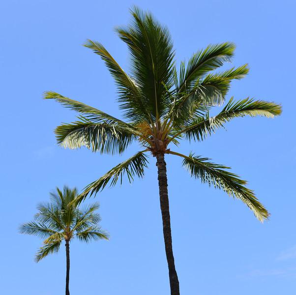 Big Island - Hawaii - May 2013 - 26.jpg
