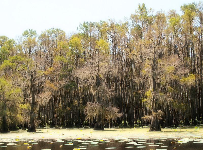 Mystical Caddo Lake
