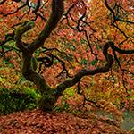 The Tree2.jpg