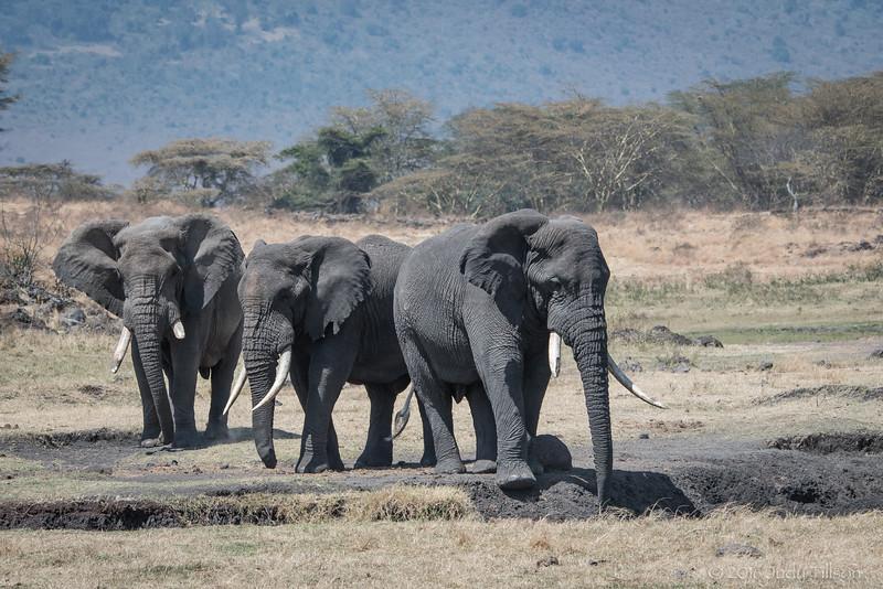 Tanzania Ngorongoro Crater, Corky shooting elephants-4345.jpg