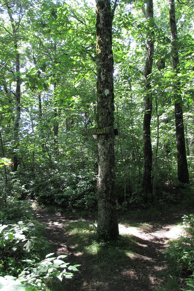 Chinquapin Mountain Trail - Lookout #5