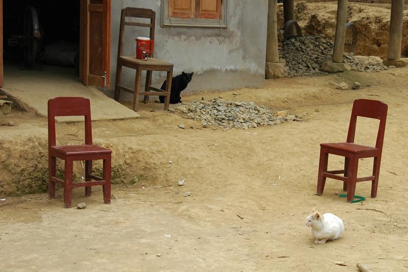 Black and White Cat - Nong Khiaw, Laos