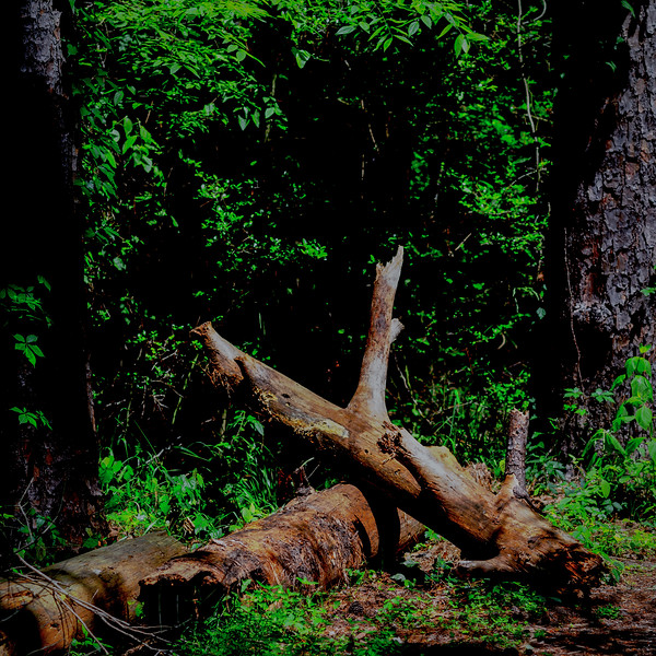 SH State Forest-2.jpg