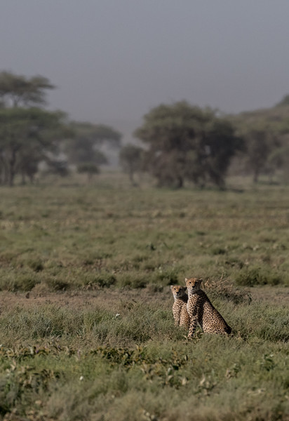 Tanzania_Feb_2018-274.jpg