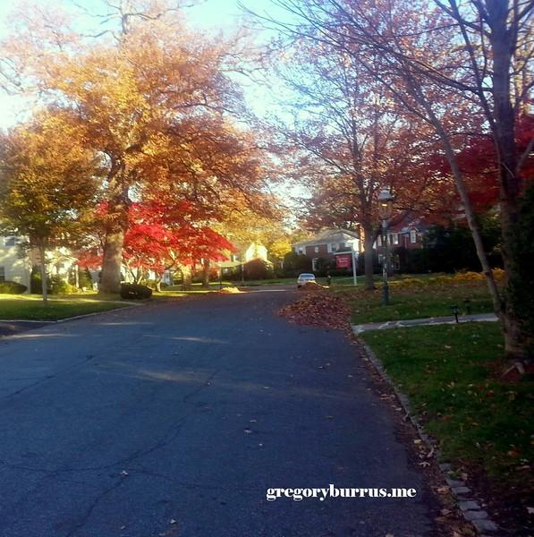 20141110 Fall This Mornings Walk Around Time 0021.jpg
