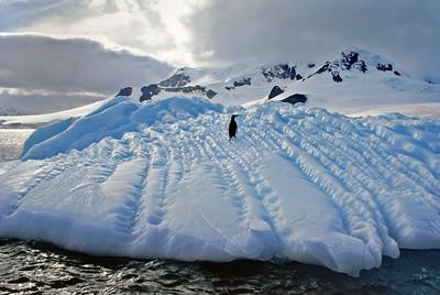Polar Life