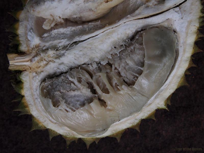Putu's-durian.jpg