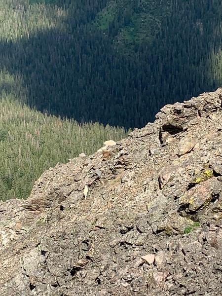 Colorado Day 14_5th Buffalo Mountain & Lily Pad