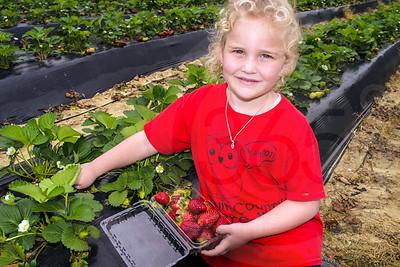 Calhoun's Produce