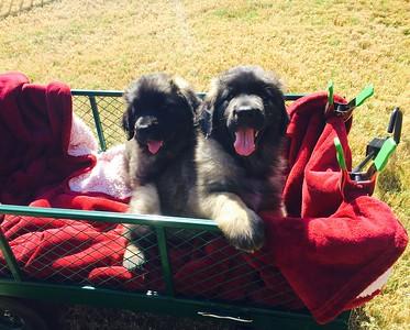 Litter N Updates - the twins