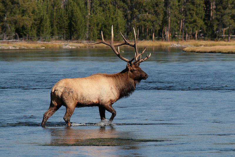IMG_8361 elk water.jpg