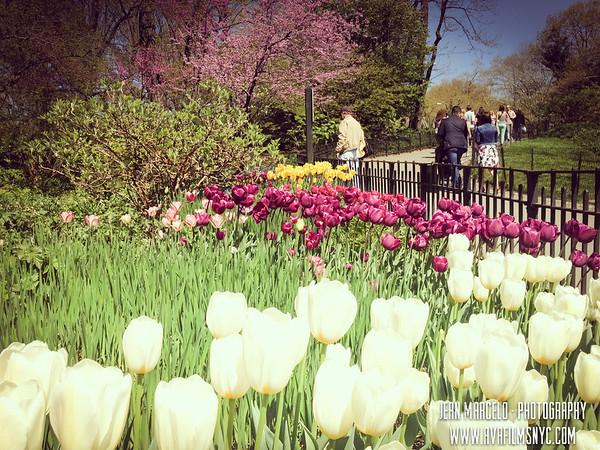 Central Park Spring 2013