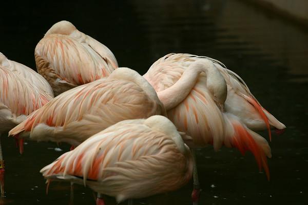Atlanta Zoo 2006