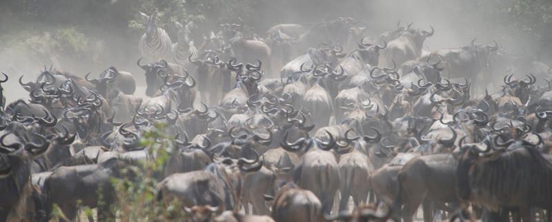 2012 Serengeti