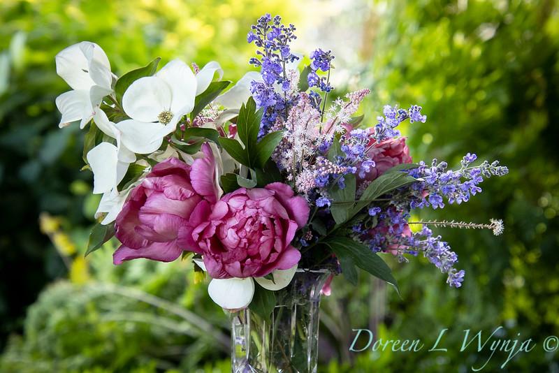 5259 Peaonia x 'Smith Opus 2' Takara - Cornus 'Venus' - 6228 Nepeta x faassenii 'Walker's Low' cut flowers_0980.jpg